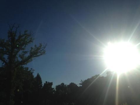 sunsplash tree